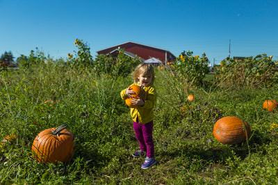Wealth in a Pumpkin Patch
